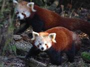 Naturschutz-Tierpark
