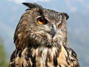 Greifvogelschau imTierpark Sababurg
