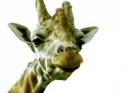Zoo in Dortmund