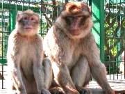 Merziger Tierpark