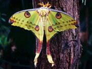 alaris Schmetterlingspark auf Rügen