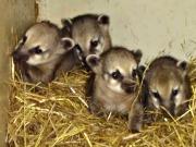 Tierpark Fauna in Solingen