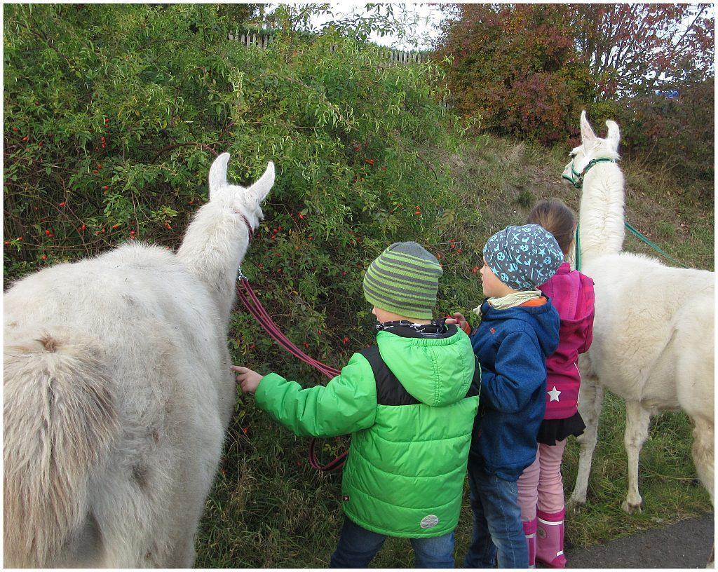 Überraschungen warten beim Kindergeburtstag mit den Unstrut-Lamas