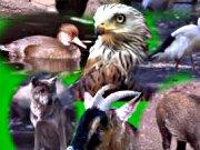 Tierpark Sassnitz