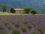 Nördliche Provence mit Kindern entdecken