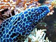 Korallenriffaquarium Nettersheim