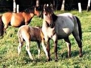 Westfälischen Pferdemuseum