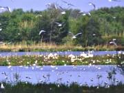 Biologische Station Zwillbrock in Vreden