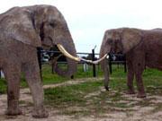Elefantenhof in Platschow