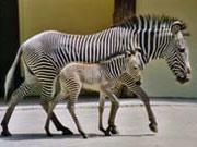© Zoo Frankfurt