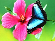 Garten der Schmetterlinge Schloß Sayn