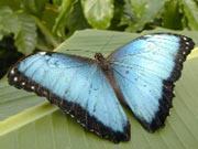 alaris Schmetterlingspark in Wittenberg