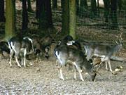 Fürstlicher Tiergarten auf Schloss Braunfels