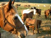 Ponyhof Ebental