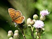 Schmetterlingspfad