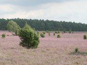 Familienwanderung in der Lüneburger Heide