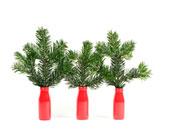 Welcher Tannenbaum eignet sich als Weihnachtsbaum?