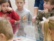 Kindergeburtstag im Zoologischen Museum Kiel