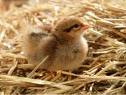 Ausstellung vom Ei zum Küken