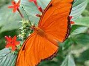 Alaris Schmetterlingspark Buchholz