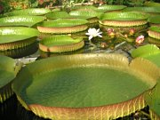 Botanischer Garten Braunschweig