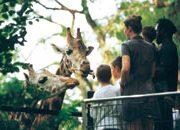 Sonderattraktionen im Tierpark Hagenbeck in Hamburg