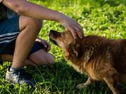 Welches Haustier soll es für Kinder sein