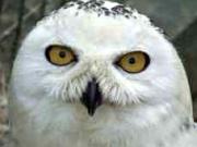 Vogelpark Irgenöd in Ortenburg