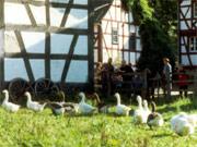 Kindergeburtstag im LVR-Freilichtmuseum in Kommern
