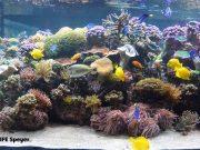 Welt der Korallen