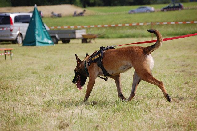 Mantrailing - Team-Training mit einem Personensuchhund