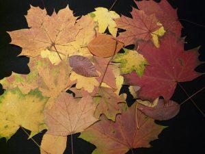Herbstliches Basteln mit Kindern