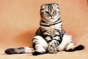 Welches Haustier für mein Kind - Katze
