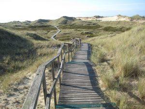 Pfad in den Dünen auf der Insel Amrum